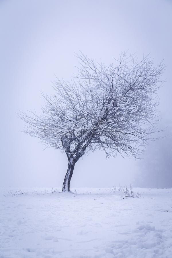 A young tree on a frosty day. Cloacked in winterly mist royalty free stock photos