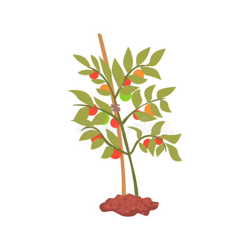 Young tree plant in the ground cartoon vector Illustration royalty free illustration