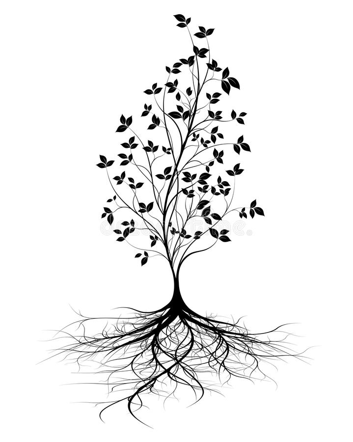 Young tree with roots royalty free illustration