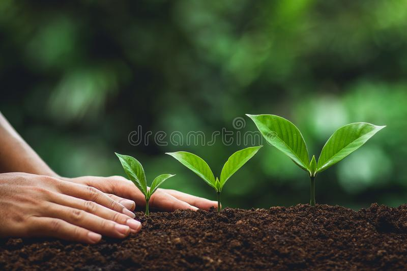 Young tree Tree Planting Tree care Watering a tree in nature,Growing trees Three. Young tree Tree Planting Tree care Watering a tree in natureYoung tree Tree royalty free stock images