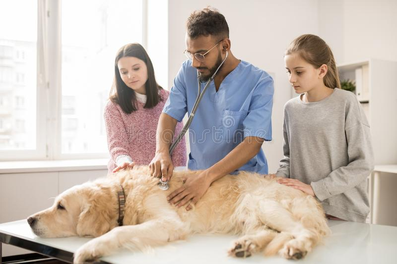 Medical care of dog royalty free stock images