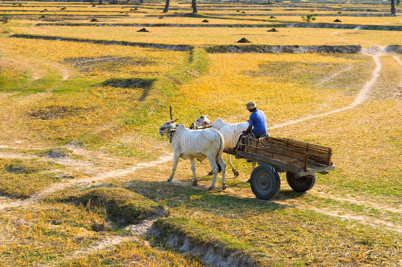Download Young Vietnamese Farmer On The Way To His Farm Editorial Stock Photo - Image: 26030818