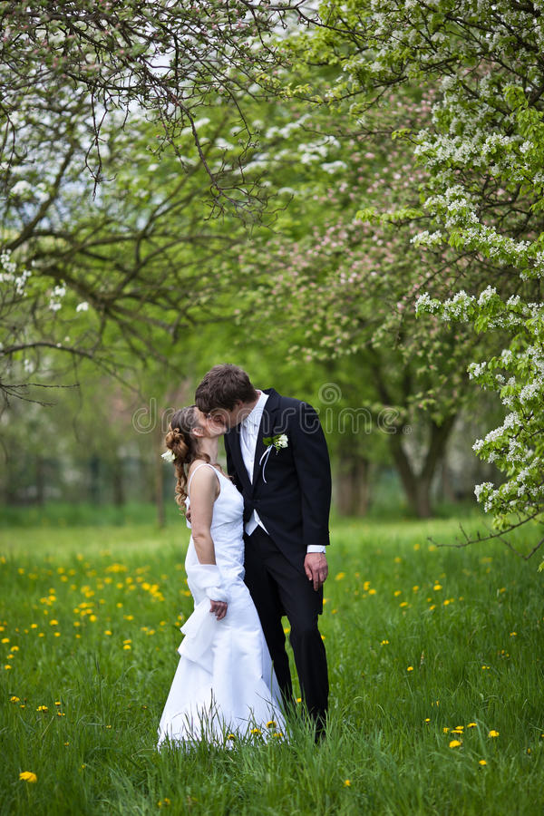 Download Young wedding couple stock image. Image of husband, field - 15432461