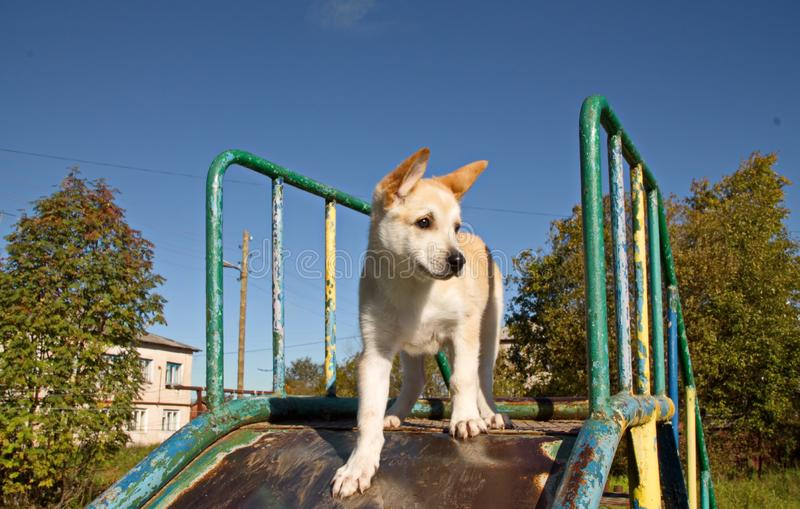 Young dog on blue sky background stock photo