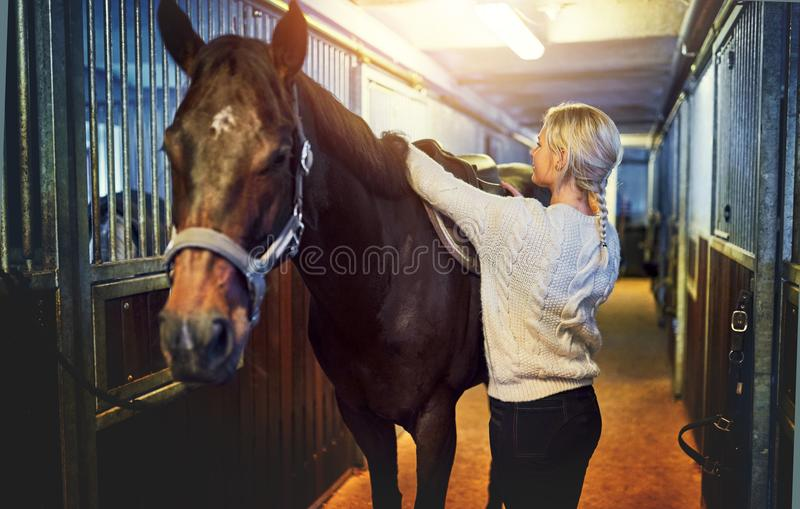 Young woman adjusting her horse`s saddle before a ride stock images