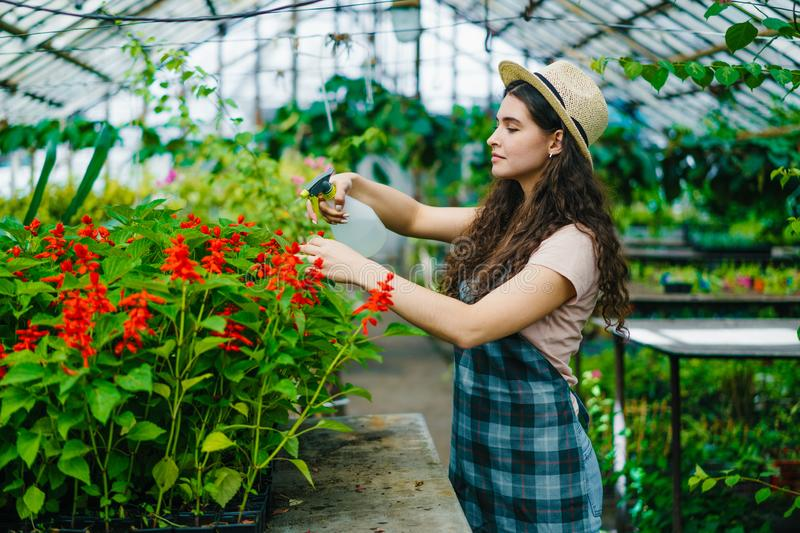 Young woman in apron and hat spraying water on plants in greenhouse. Young woman in apron and hat is spraying water on plants in greenhouse using spray bottle stock image