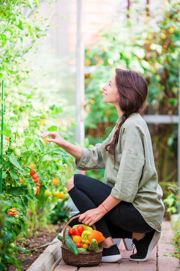 Young woman with basket of greenery and vegetables in the greenhouse. Time to harvest. stock images
