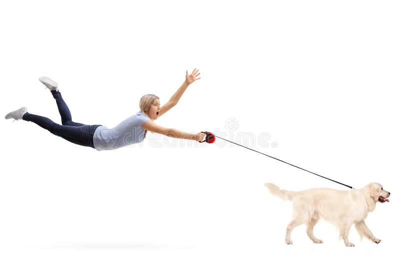 Young woman being pulled by her dog royalty free stock photo
