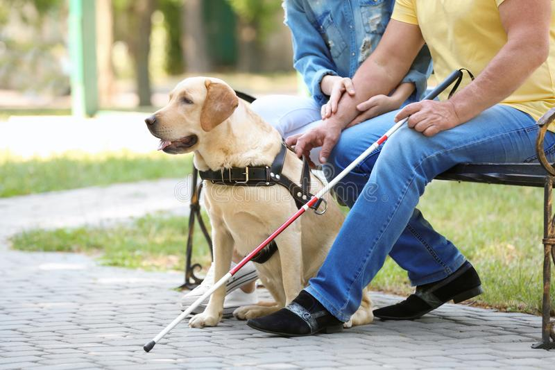 Young woman and blind man with guide dog sitting stock photo