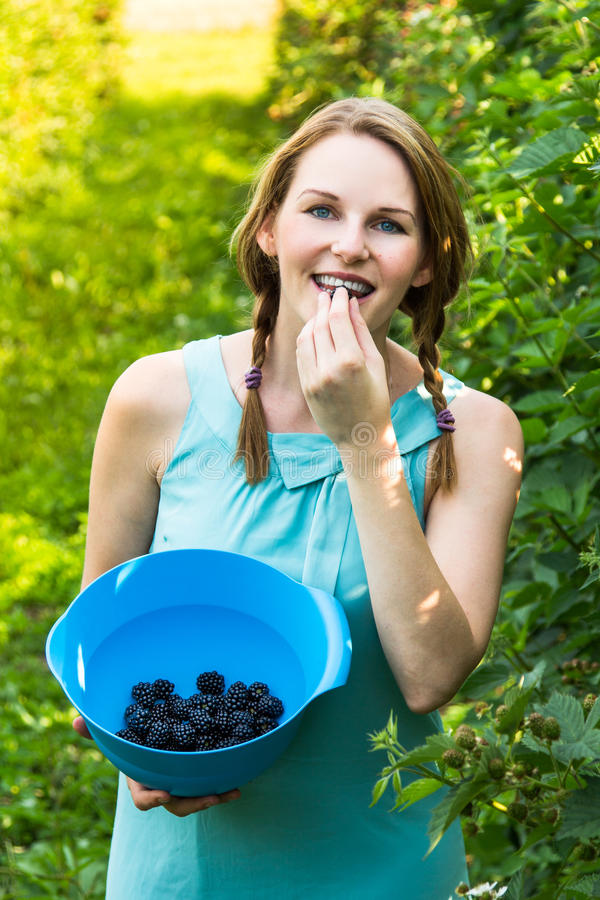 Young woman in blue dress picking blackberries royalty free stock image