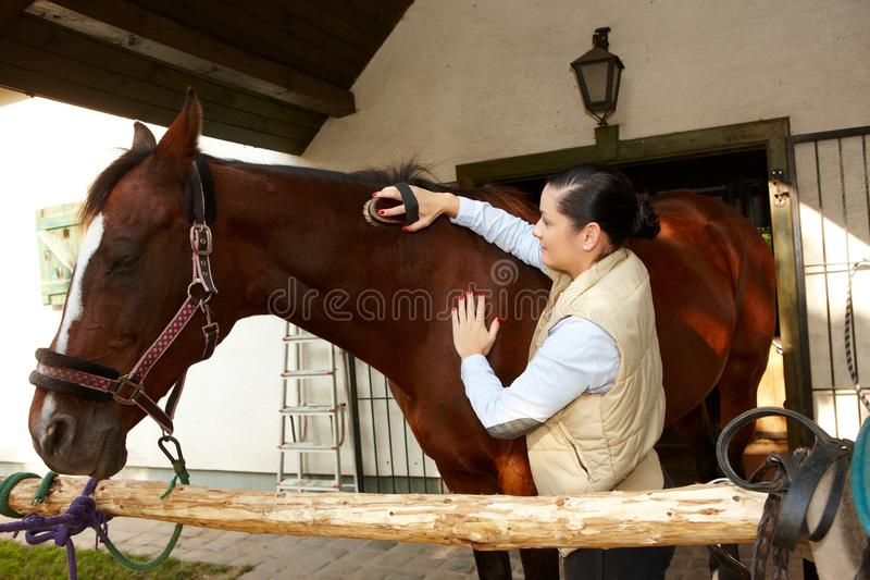 Young woman caressing horse. Young woman caressing and grooming brown horse stock photography