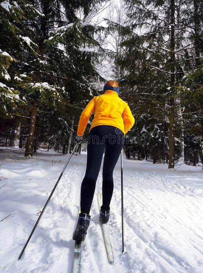 A young woman cross country skiing in a wonderful forest. royalty free stock images