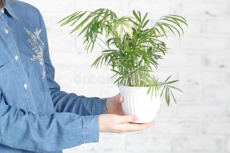 Young woman cultivating home plants royalty free stock images