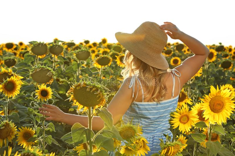 Young woman dancing in sunflower field royalty free stock photos
