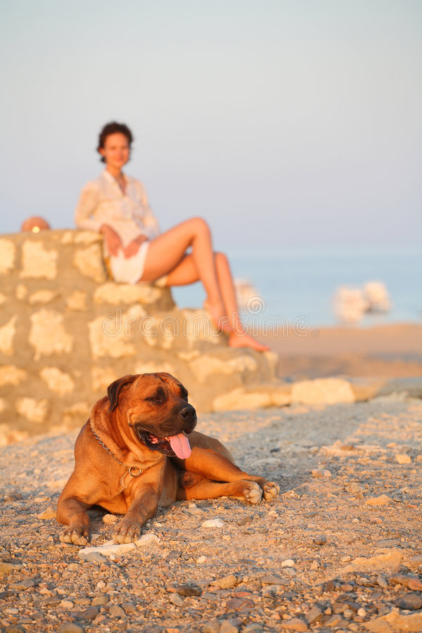 Young woman and the dog royalty free stock photography