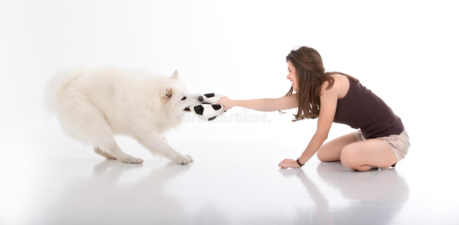 Young woman and dog playing with a ball. A studio image of a young woman playing with a white dog, both pulling on a football: the dog with it's mouth and the stock image