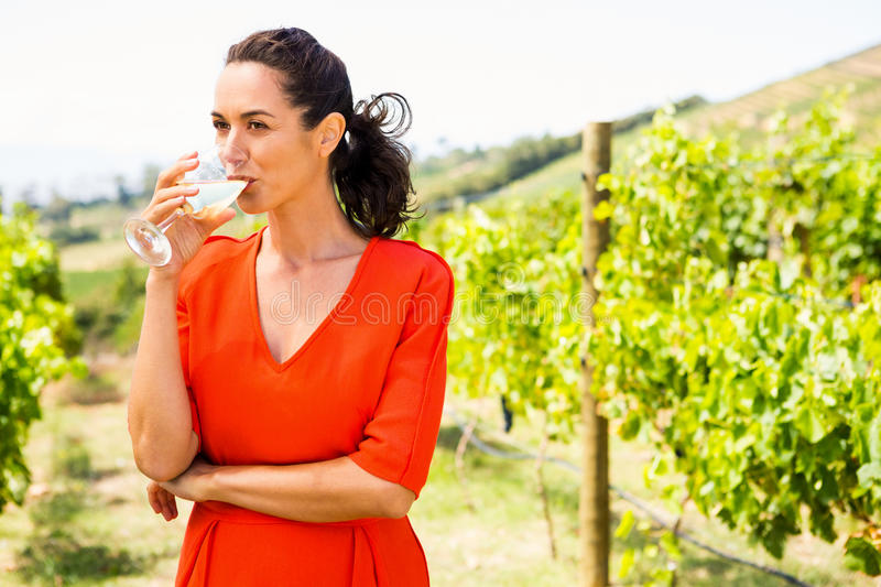 Young woman drinking wine stock images