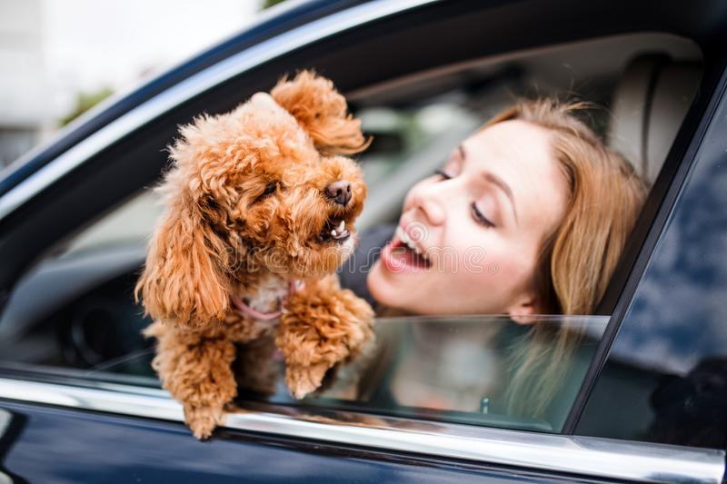 Young woman driver with a dog sitting in car, looking out of window. royalty free stock images