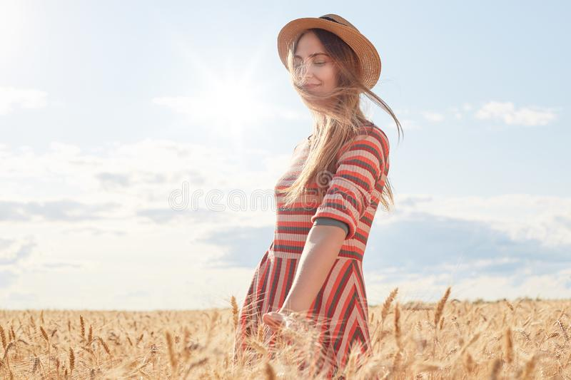 Young woman with fair hair posing in wheat field, touching golden spikelet with hands, female wearing striped dress anf straw hat. Girl has pleasant facial stock photo