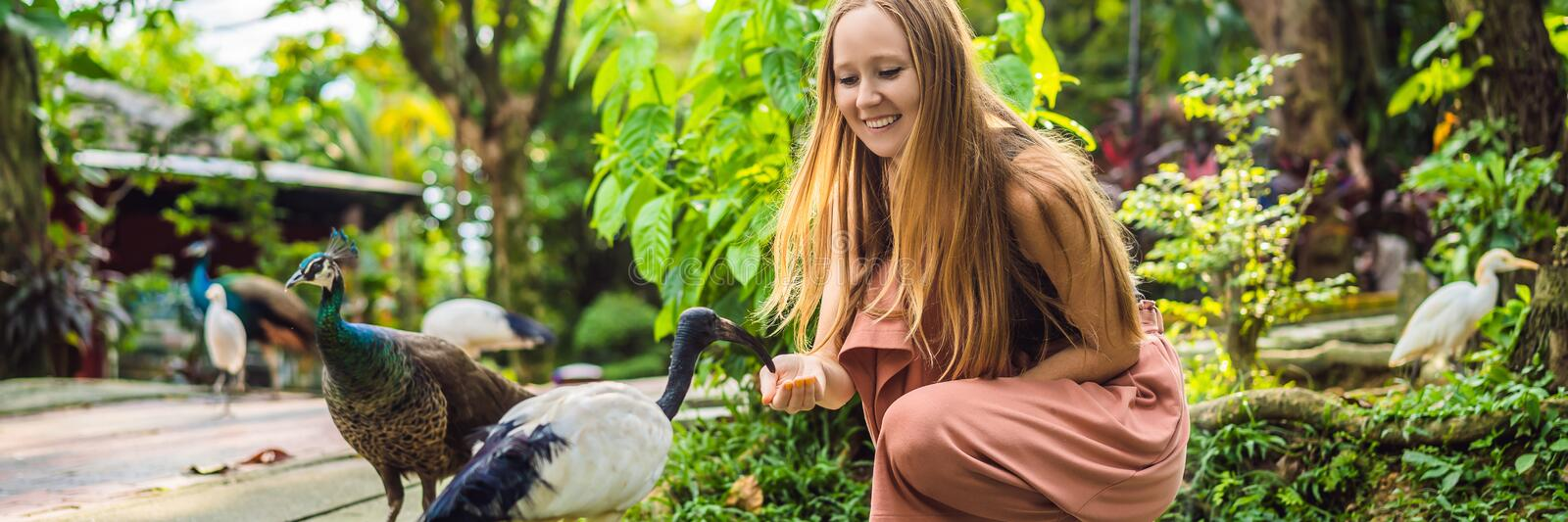 Young woman feeding an African Sacred ibis BANNER, LONG FORMAT stock photo