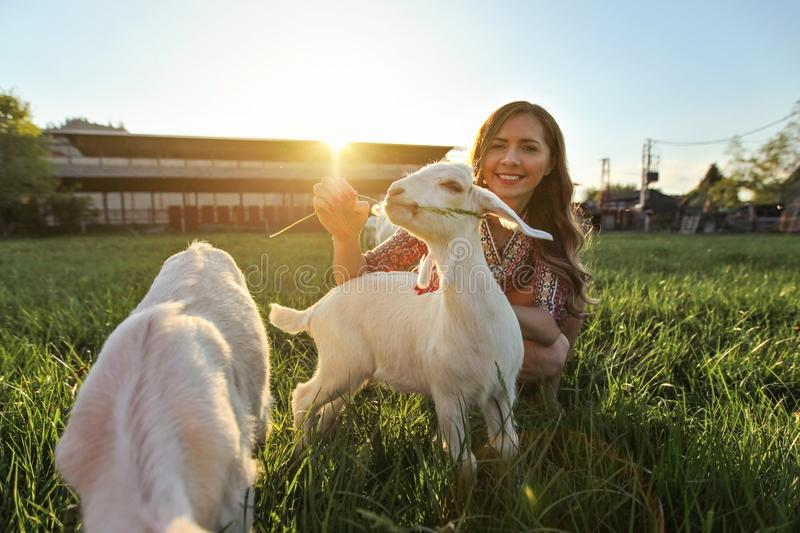 Young woman feeding grass to goat kids, wide angle photo with strong backlight and sun over farm in background.  royalty free stock photos