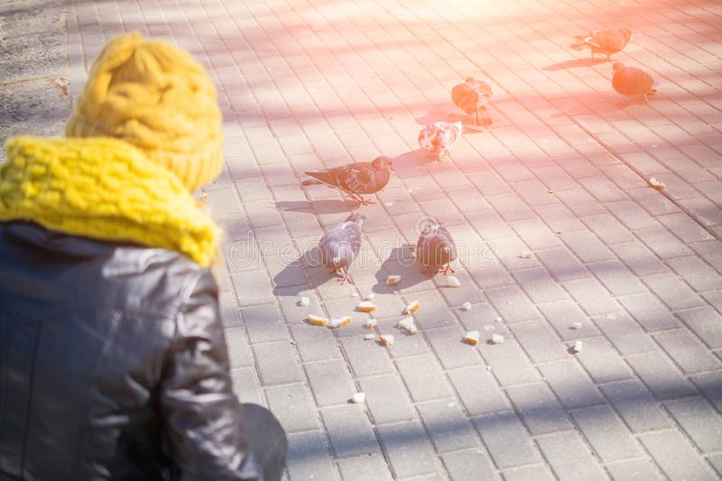 Young woman feeding pigeons in city park stock photography