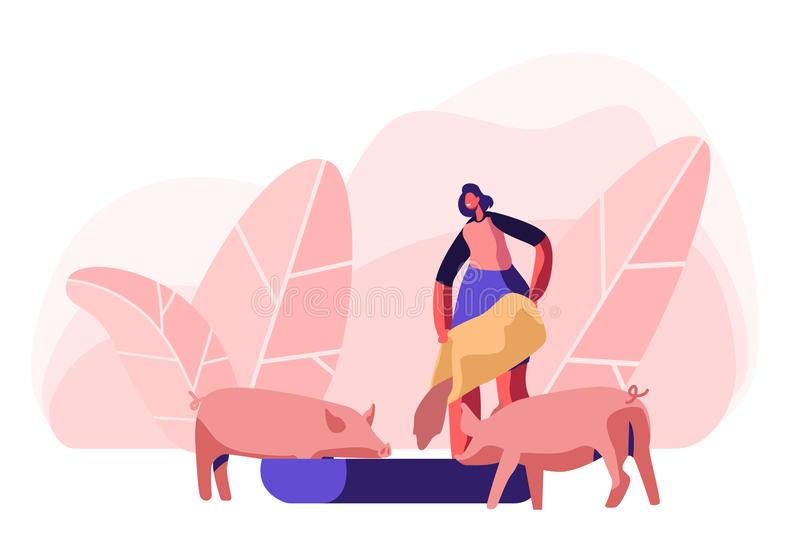 Young Woman Feeding Pigs Putting Grain in Trough. Female Farmer Character at Work Process Caring of Domestic Animals at Farm. Agriculture, Rancher Summer Time stock illustration
