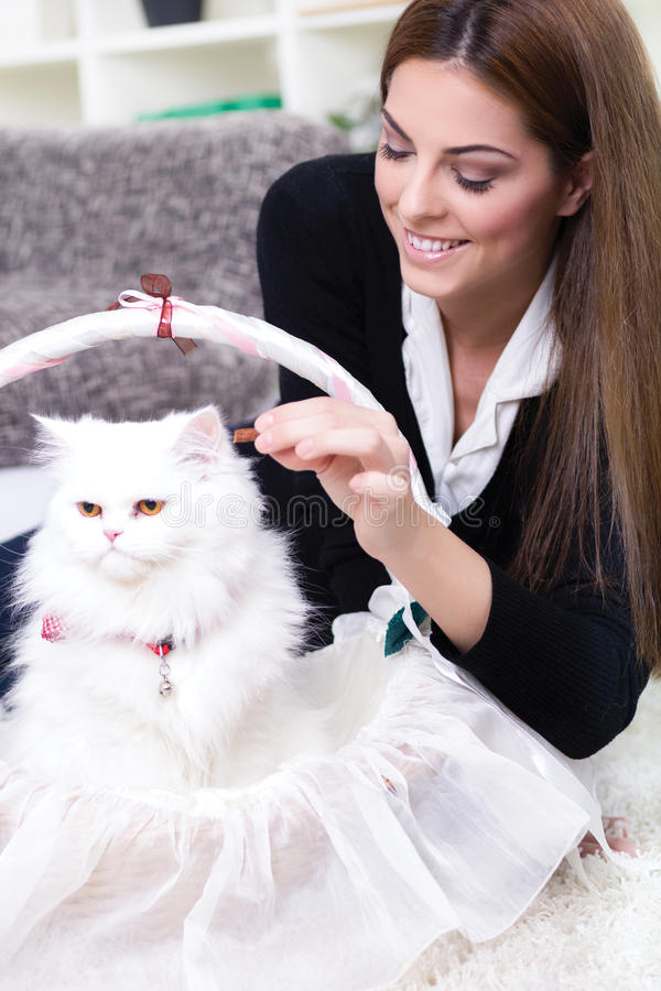 Young woman feeding a white Persian cat stock images