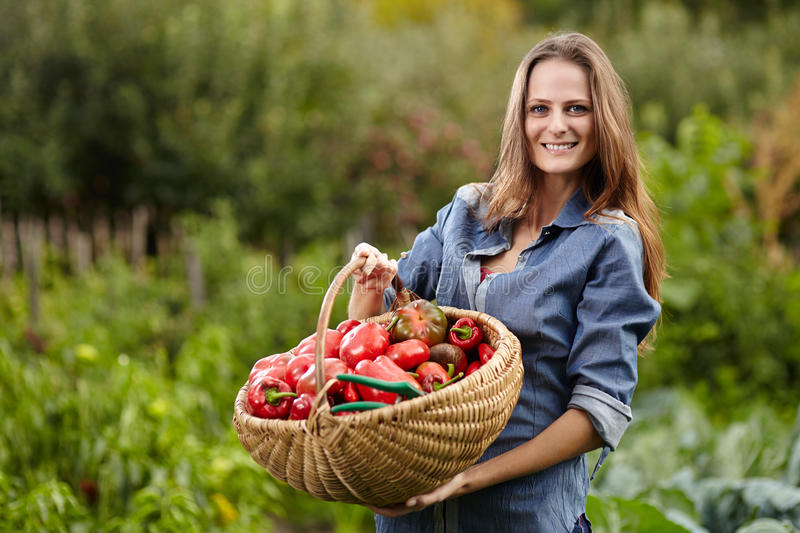 Young woman gardener holding a basket full of red paprika royalty free stock photo