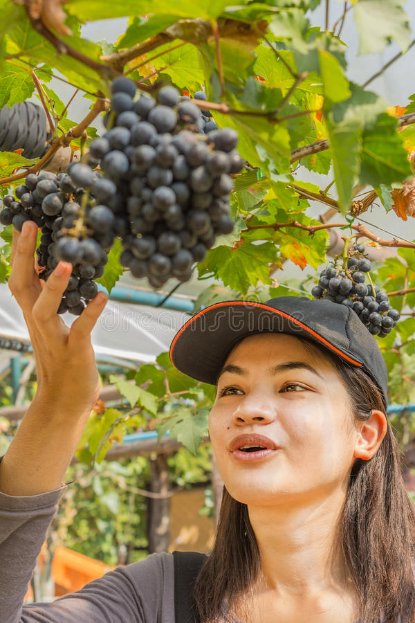 Young woman with grapes outdoor stock photography
