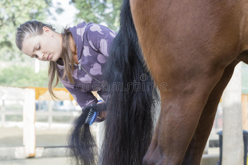 Young woman grooming a horse. Young woman is combing the tail of a purebred brown horse at the byre - focus on the face stock photography