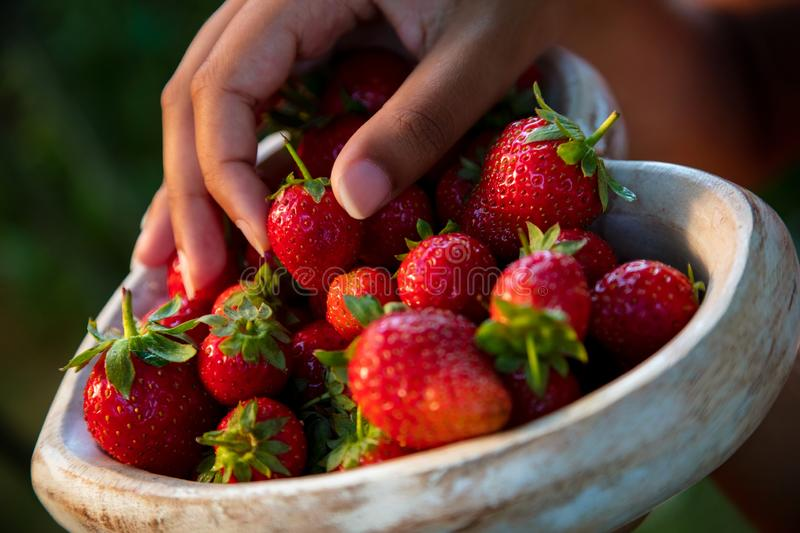 Young Woman Hands Holding Heart Shaped Bowl of Strawberries. Girl or young woman hands holding a wooden heart shaped bowl of freshly picked red strawberries stock photo