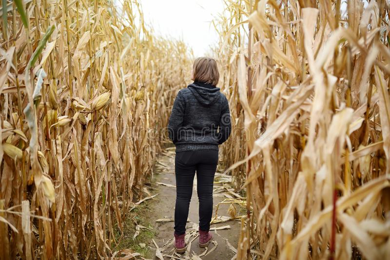 Young woman having fun on pumpkin fair at autumn. Person walking among the dried corn stalks in a corn maze. Traditional american stock photography