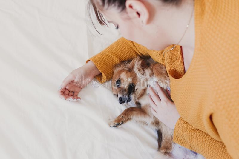 Young woman and her cute dog lying on bed. love for animals concept. top view stock photography