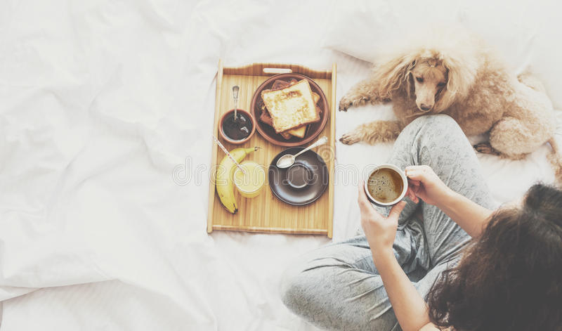 Young woman with her dog in a bed. stock images