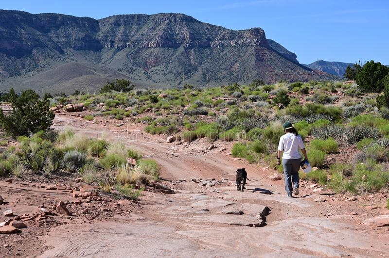 Young woman with her dog at Toroweap in the Grand Canyon. Young woman walks her dog on the rugged roads and trails at Toroweap in Grand Canyon National Park stock image