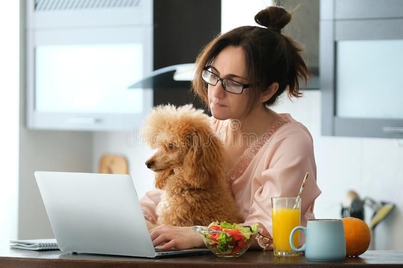 Young woman with her dog working using a laptop at home. The young woman is working remotely. Young woman with her dog working using a laptop at home. Concept royalty free stock photography