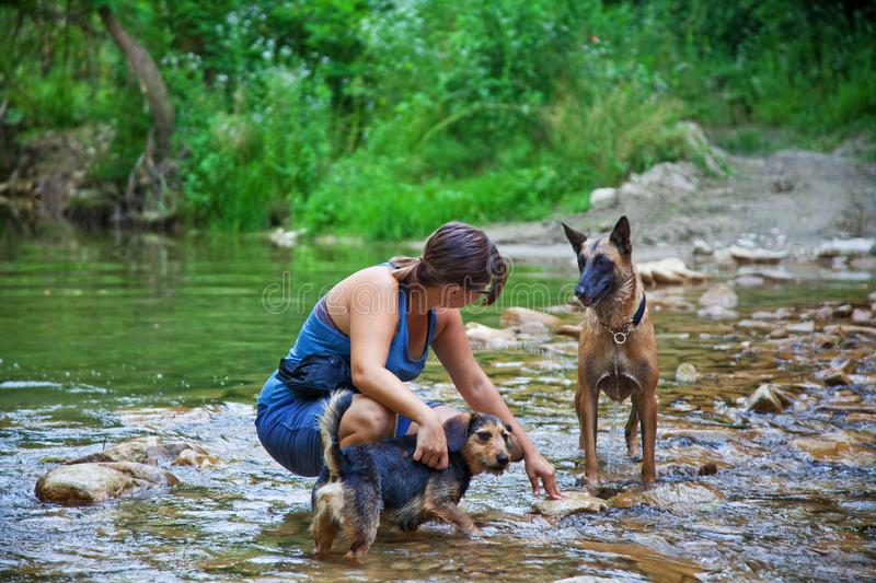 Young girl with her dogs stock photos