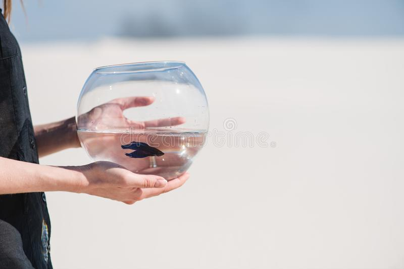 Young woman hold round aquarium with fish. Woman hold round aquarium with fish. Background of desert or sand royalty free stock photography