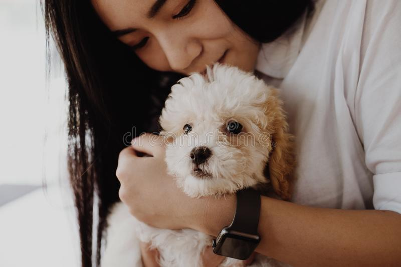 Woman holding adorable dogt. female teenager with pet at home. p stock photos