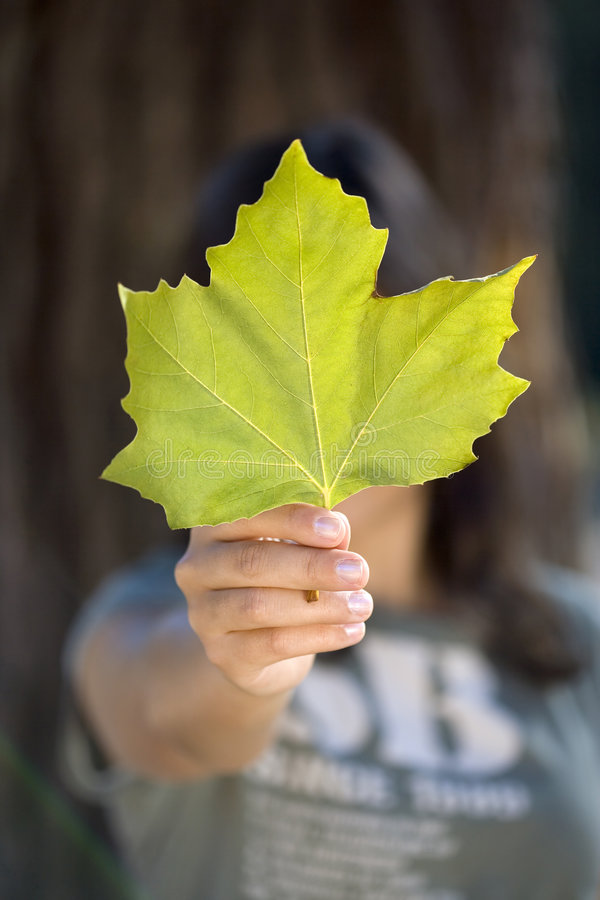 Young woman holding green maple leaf royalty free stock photography