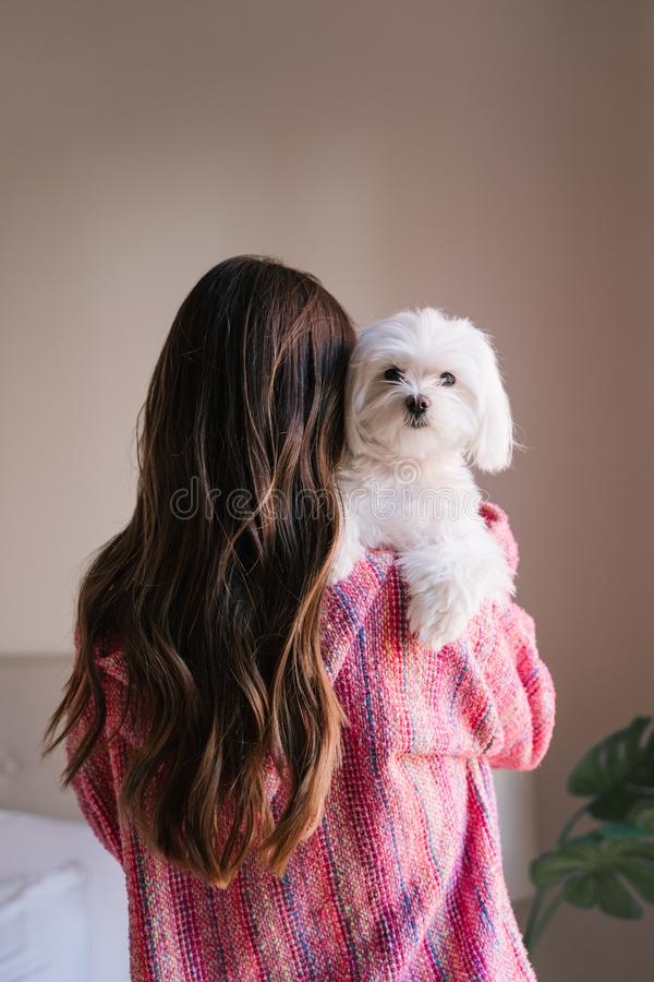 young woman holding her maltese dog on shoulder at home. Pets and lifestyle. back view stock photography