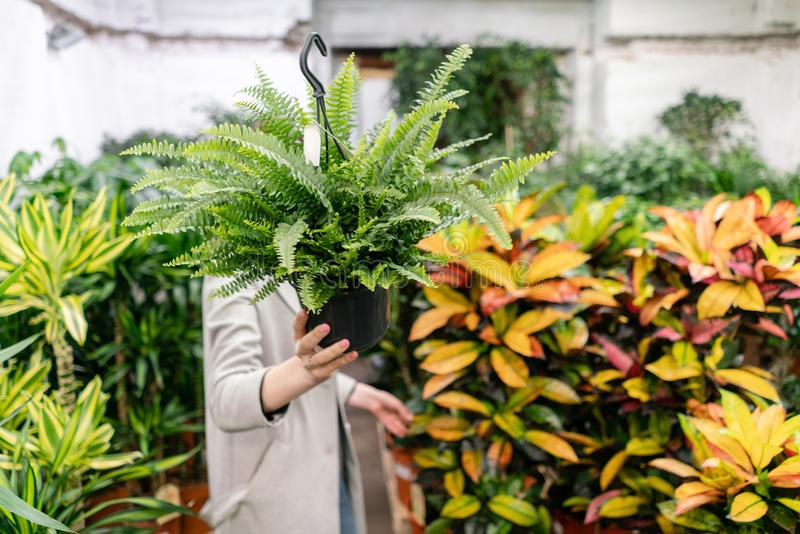A young woman holding a Nephrolepis plants, fern, chooses a plant for the house. Hiding behind him. Many different royalty free stock image