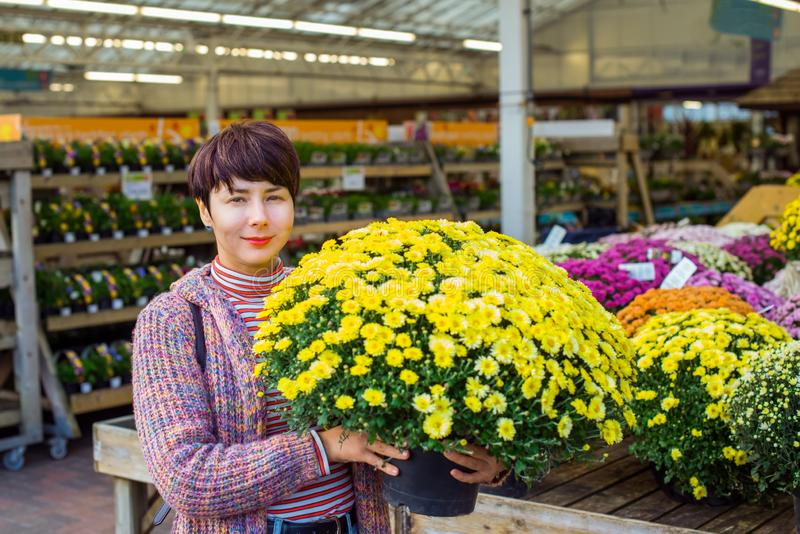 Young Woman holding potted yellow chrysanthemum daisy flowers at garden shopping center. Autumn ideas of outdoor decorating. Hobby stock images