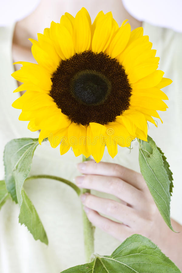 A Young Woman Holding A Sunflower stock photography