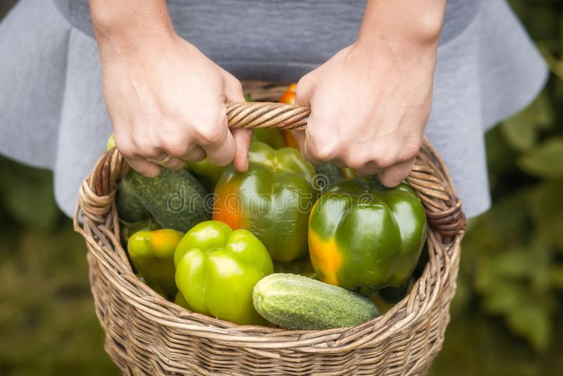 Close up fresh vegetable stock photo