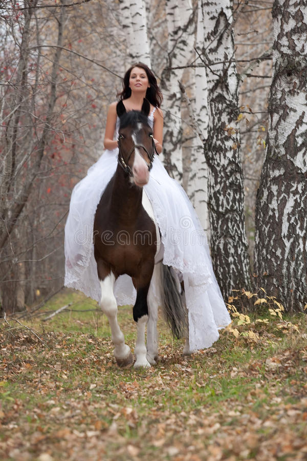 Young Woman And Horse. In a forest royalty free stock image