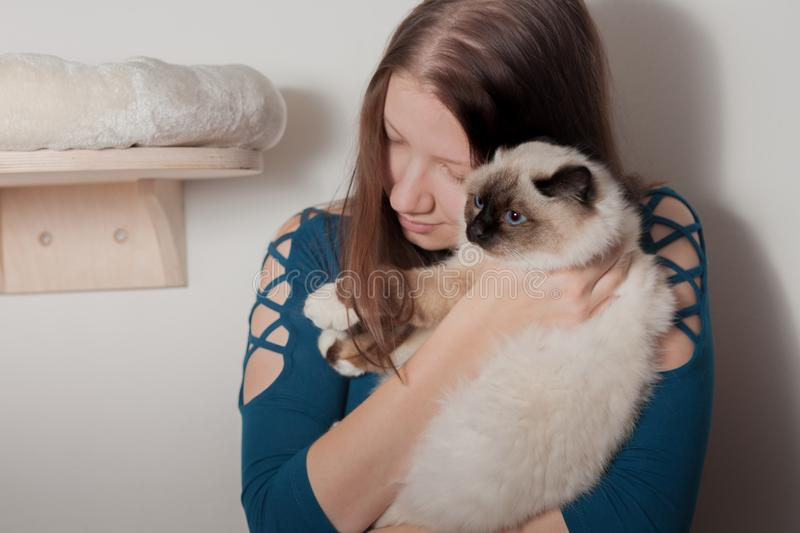 Young woman is hugging her Birman cat. Young woman is hugging her seal point Birman cat, 9 month old cat, male with blue eyes stock images