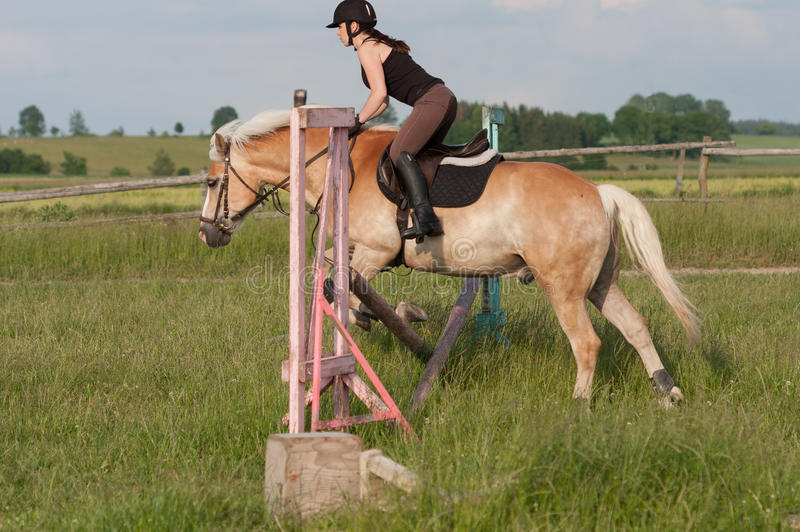 A young woman jumping over hurdle on a horse Haflinger stock images
