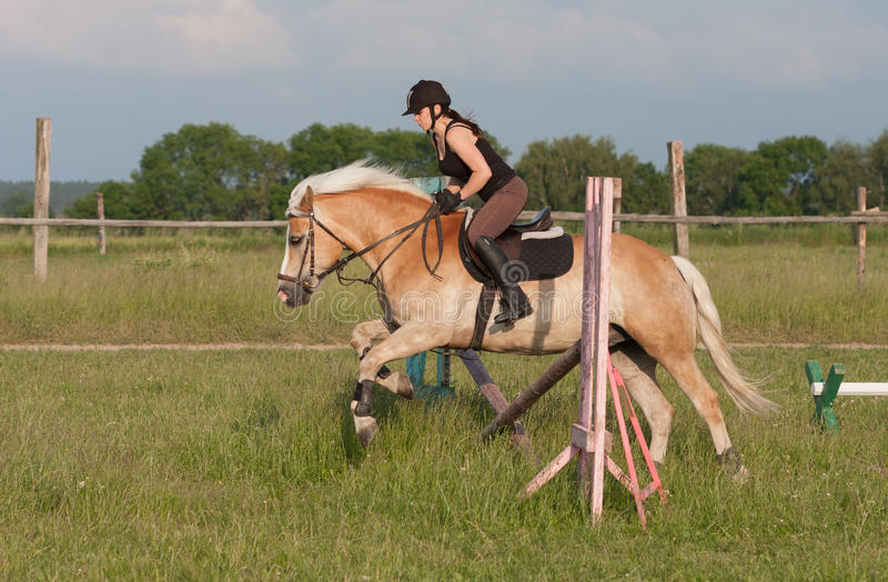 A young woman jumping over hurdle on a horse Haflinger stock image